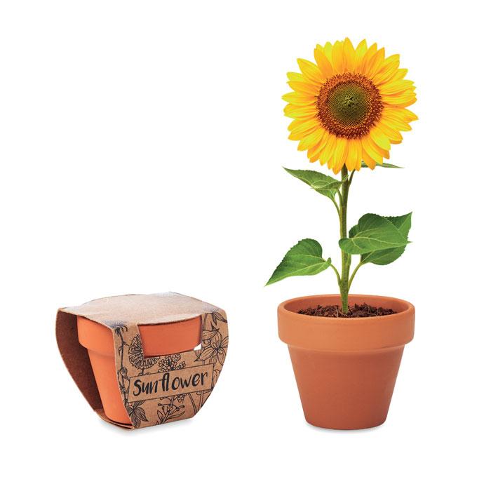 Kwiat w małej doniczce z terakoty SUNFLOWER